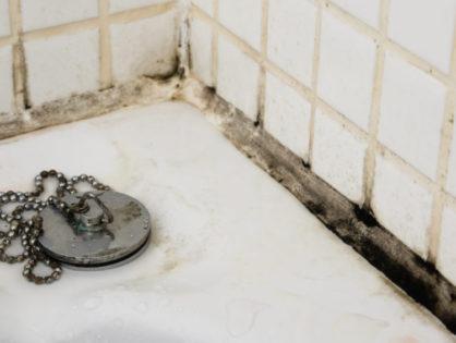 Черный грибок в ванной